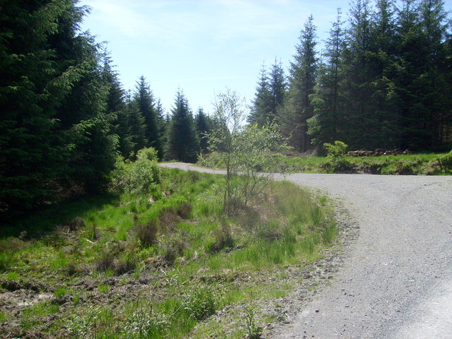 Bryn Arau Duon: forest road junction