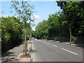 TQ3574 : Brenchley Gardens (road) by Stephen Craven