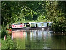 SU3668 : Rose of Hungerford, Kennet and Avon Canal by Miss Steel