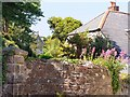 SX4350 : Cawsand Cottage and wall by Mick Lobb