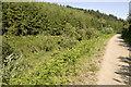 SX0967 : Cardinham Woods by Rabbi WP Thinrod