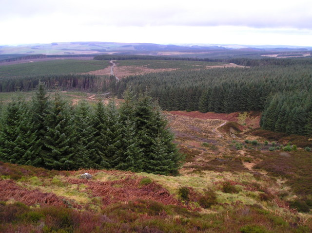Meadow Cleuch and Wauchope Forest