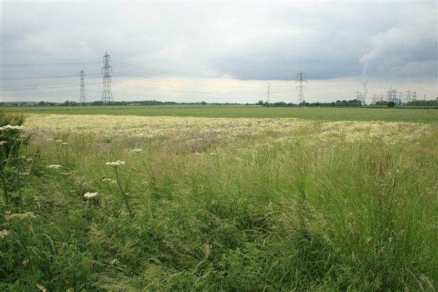 Field margin, off Helenship Lane