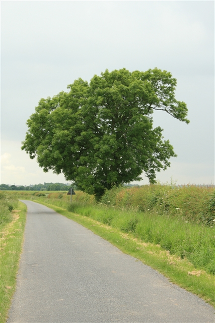 Tree, Helenship Lane