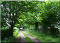 SJ5853 : Tree-lined track to Brindley Cottage by Espresso Addict