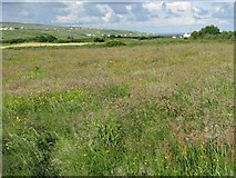 R1097 : Meadow with Atlantic Ocean in the distant background by C Michael Hogan