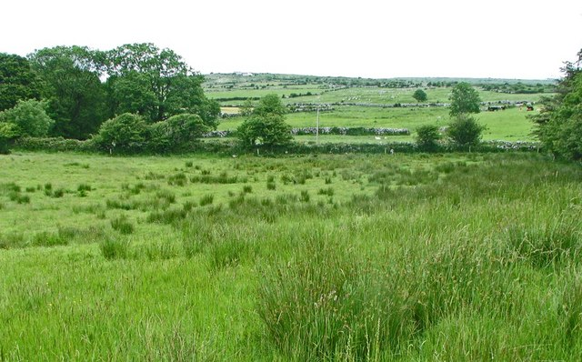 Rushy Burren meadow