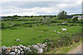 R2293 : Horse grazing in drystone walled pasture by C Michael Hogan