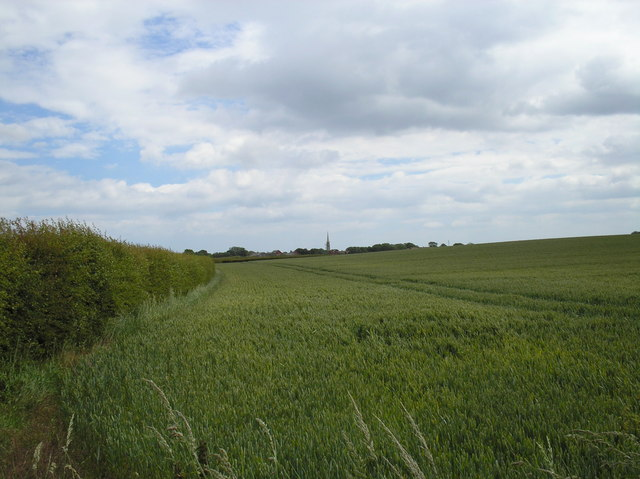 Field on the edge of Patrington