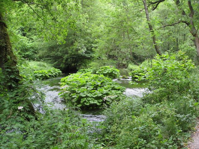 Dovedale - River Dove