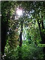 SX9065 : Sun pierces the foliage at Chapel Hill Pleasure Grounds, Torquay by Tom Jolliffe