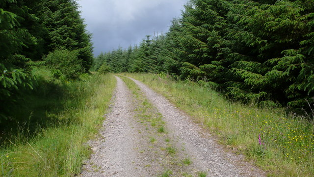 Forestry track, Craik Forest