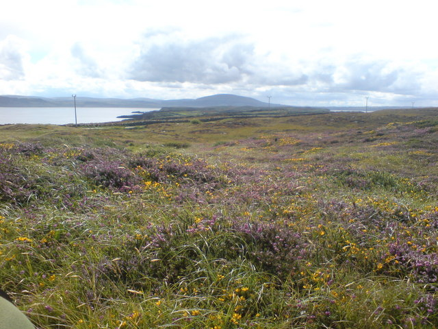 Looking from East Lighthouse over multicoloured grasslands towards County Antrim Coast