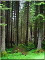 NN5717 : Strathyre Forest : Week 26