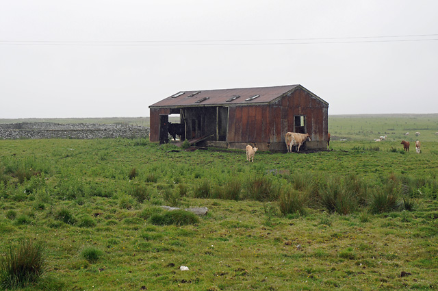 Cattle on Farmland and Derelict Farm Building