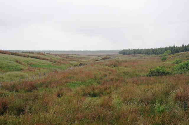Wester Watten Moss