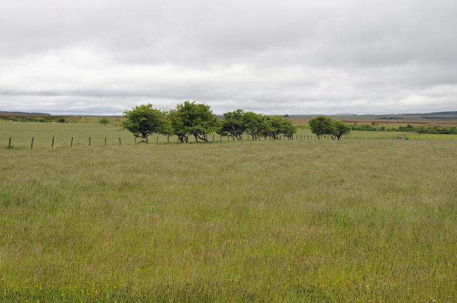 Grassland and Trees near Strath