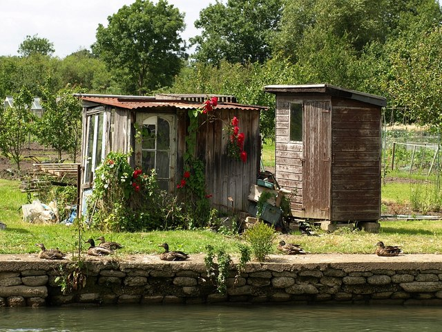 Allotment sheds at Osney