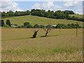 SU7797 : Farmland, Stokenchurch by Andrew Smith