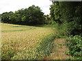 SU7386 : Wheat field by Warmscombe Lane, near Bix Bottom by David Hawgood