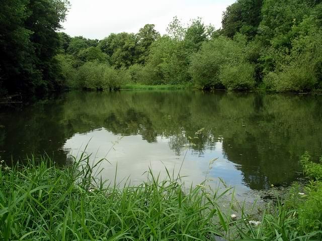 Pond, Nuthall