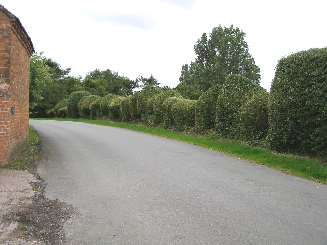 Ornamental Yew Hedge, Longslow