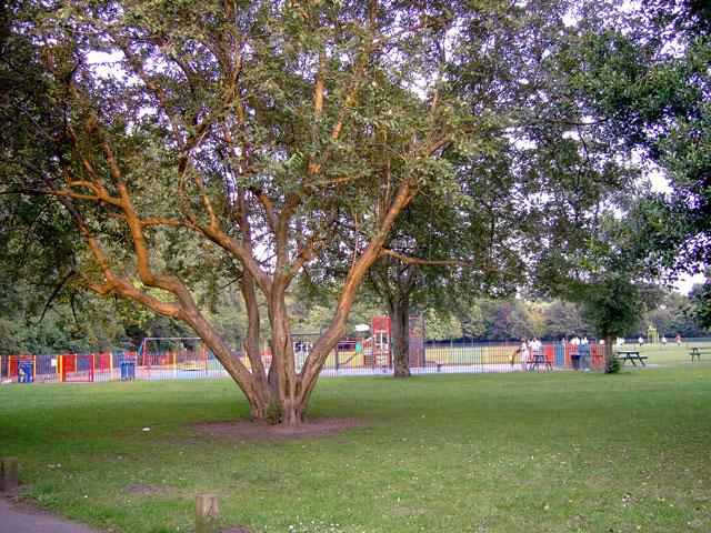 Didsbury Park, Manchester