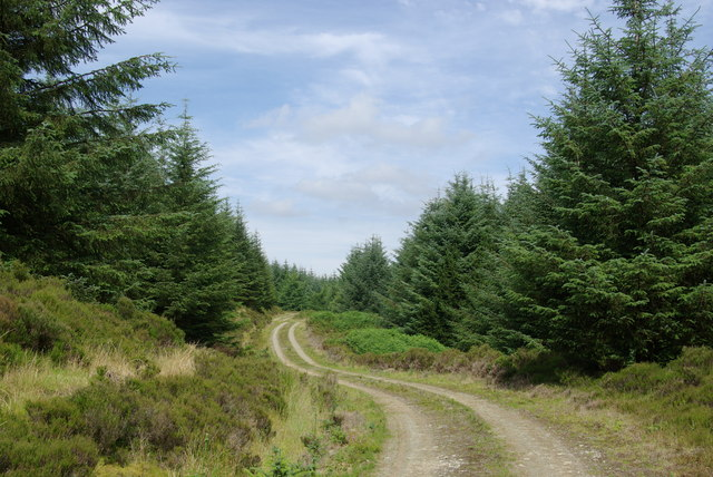 Forest track north of Gled Knowes