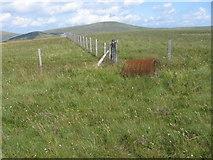 NS6302 : Wedder Hill towards Blacklorg Hill by Chris Wimbush