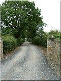 N8637 : Country Lane by James Allan