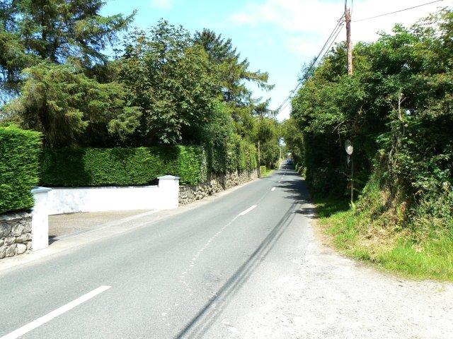 Leafy regional road