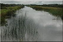 N6431 : Canal embankment , Edenderry by Roger Butler