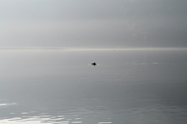Porpoise, Ardintoul Point