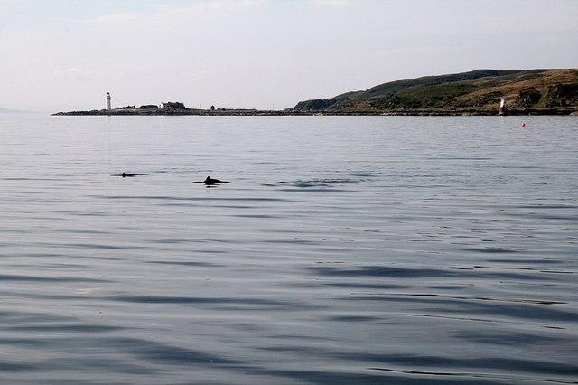 Porpoises, Isleornsay