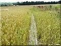 SK3198 : Footpath through a wheat field by Wendy North