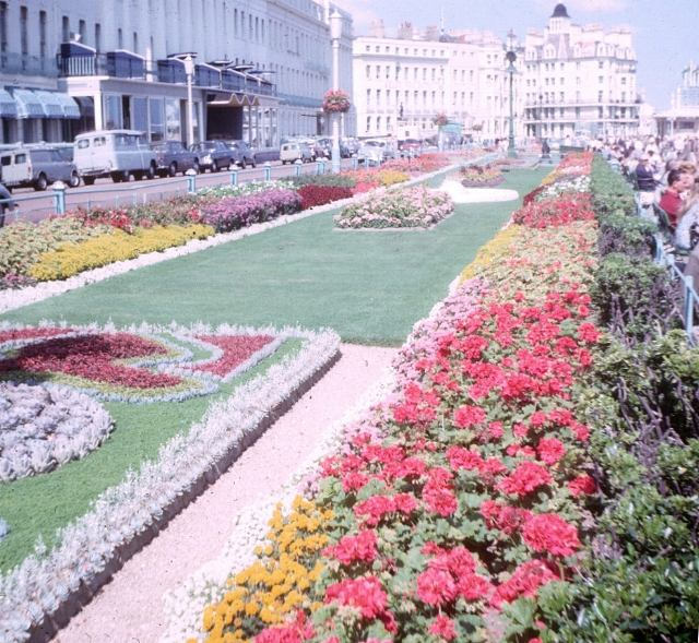Flowerbeds on Eastbourne promenade, 1965