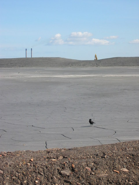 Ash Lagoon with crow, Musselburgh