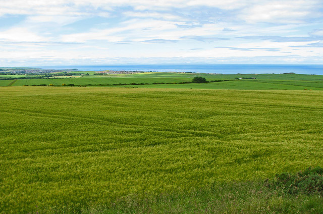 Grain fields with Banff Bay beyond