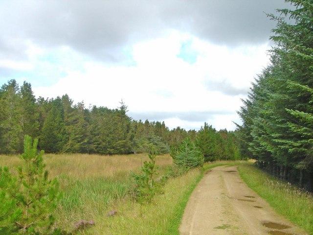Achairn Forest