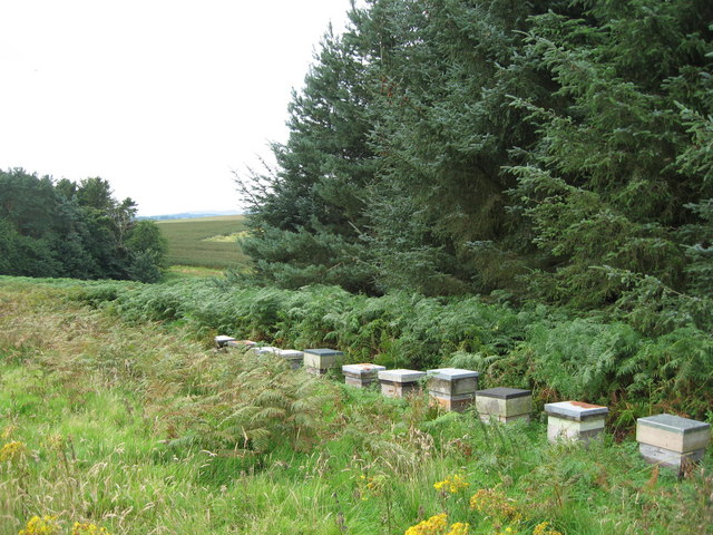 Bee hives near Lorbottle, Northumberland