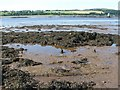 NS4173 : Dumbuck Crannog - the remains of the platform by Lairich Rig