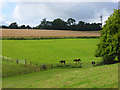 SU8399 : Horses grazing at Speen by Andrew Smith
