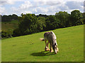 SU8399 : Horse grazing at Speen by Andrew Smith