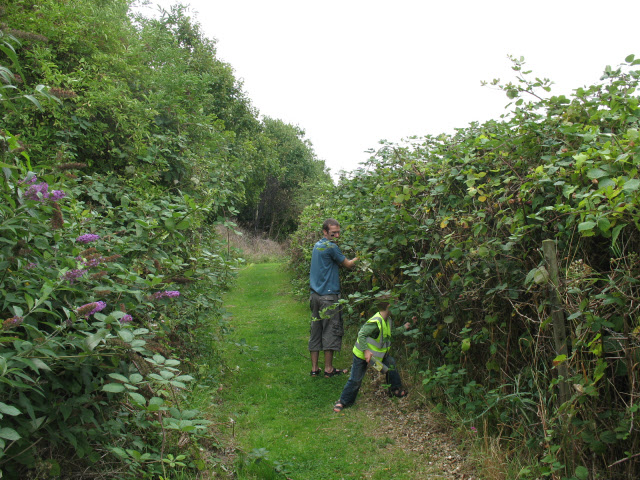 Blackberry picking at Crossness