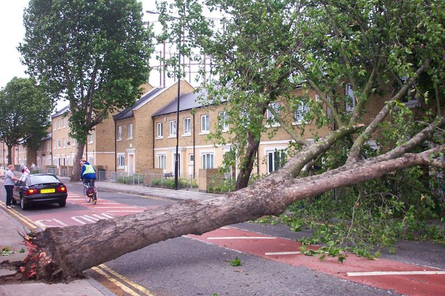 Fallen Tree Abbotts Road June 2004