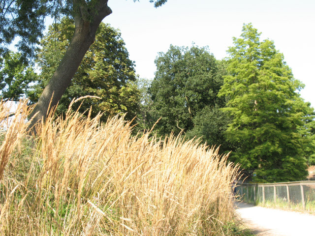 Long grass by the lake, Crystal Palace