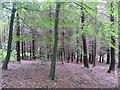SE0838 : Conifer plantation, St Ives Estate, Harden by Humphrey Bolton