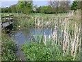 SK6203 : Wildlife pond at Evington Park by Evan