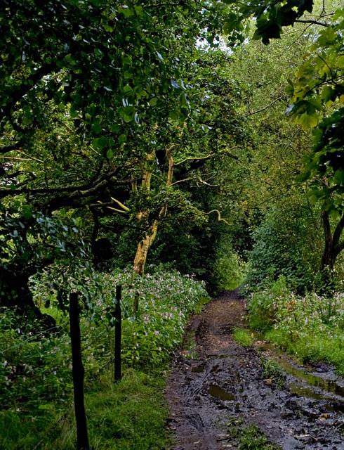 Path along The Goit