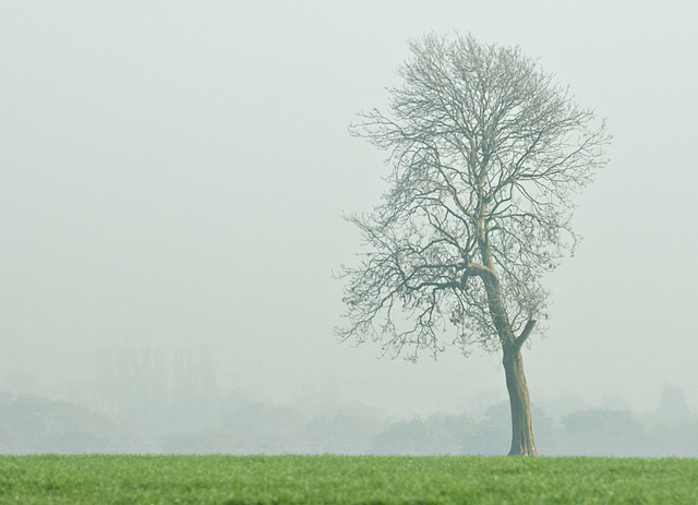 Fog and tree